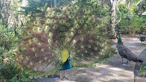 Up to 48% Off Jungle Prada Site Tour from Discover Florida at Discover Florida, plus 6.0% Cash Back from Ebates.