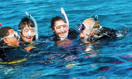 Wave Break Island Discover SCUBA Diving Tour for One ($99) or Two People ($189) with Surfers Paradise Dive and Cruise