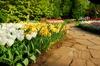 Corso online in Flower Design