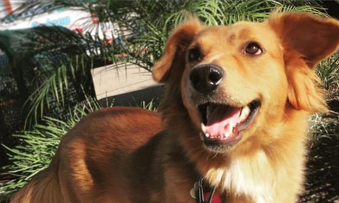 Tails 2 Trails - San Diego: Four Dog Walks from Tails 2 Trails (45% Off)