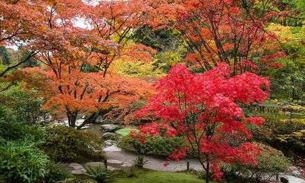 Three Large Japanese Maples