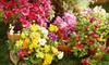Rolling Meadows Landscape and Garden Center - Morse Village: $15 for $30 Worth of Plants, Soil, and Gardening Supplies at Rolling Meadows Landscape and Garden Center in Olathe