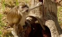 Entrada al Zoo Marcelle Natureza para niños y adultos desde 14,95 €