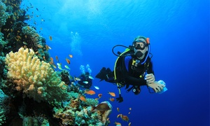 Underwater & Beyond: $79 for a PADI Scuba Diving Experience or $249 for an Open Water Dive Course with Underwater & Beyond (Up to $495 Value)