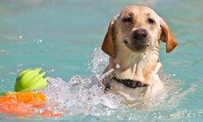 Swimming or Hydrotherapy Session for One or Two Dogs at Aqua Dog