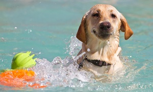 Aqua Dog: Swimming or Hydrotherapy Session for One or Two Dogs at Aqua Dog