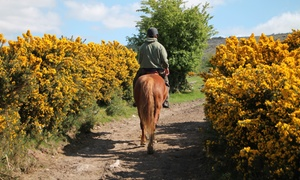 Hollywood Horse and Pony Trekking: 90-Minute Wicklow Riding Experience for One or Two with Hollywood Horse and Pony Trekking (48% Off)