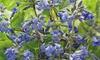 Set de plantes Clématite