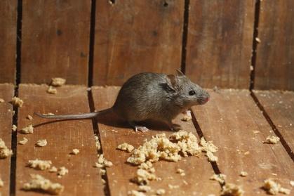 $50 Off $100 Worth of Pest Control Service - Rodent 0ac7f6b8-800c-11e6-bebf-525422b4e6f5