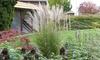 1 o 2 plantas miscanthus kleine silberspinne