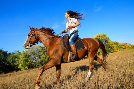OneHour HorsebackRiding Lesson at A Wee Bit of Green Farm Mustang Refuge Wounded Warrior Project (75% Off)