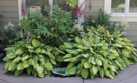 Mixed Hosta Plants (9-, 12-, 18-Pack)