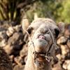 Entrada a Camel Park
