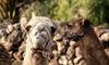 Camel Park - Camel Park: Entrada a Camel Park con paseo en camello y aperitivo para adultos y niños desde 19,90 €