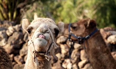 Entrada a Camel Park con paseo en camello y aperitivo para adultos y niños desde 19,90 €