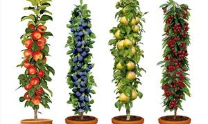 Lots de 4 ou 8 arbres fruitiers