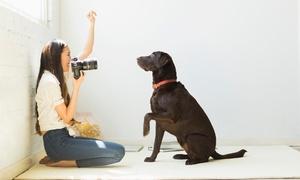 Foto Pollmann: 1 Std. Hunde-Fotoshooting inkl. Bild als Ausdruck und Datei mit Bildbearbeitung bei Foto Pollmann (66% sparen*)