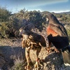 Up to 50% Off Hawk Walk Excursions at Sonoran Desert Falconry