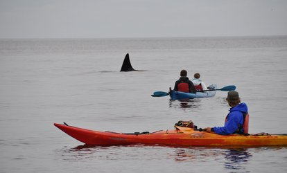 image for $39 for Three-Hour Guided Kayak Tour of Point Doughty from Outer Island Expeditions ($79 Value)