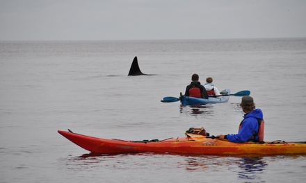 $36.24 for Three-Hour Guided Kayak Tour of Point Doughty for One from Outer Island Expeditions ($79 Value)