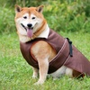 $12.99 for Ethical Products, Inc. Pet Coats