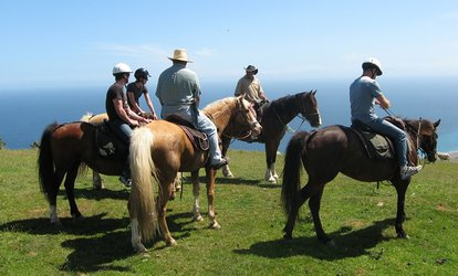 image for Two-Hour Horse Riding Trek for One ($69), Two ($135) or Four People ($269) with Coastal Views Horse Treks (Up to $360)