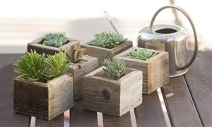 Mini Cube Salvaged Wooden Succulent Planters (3- or 6-Pack)