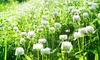 White Clover Seeds (1 lb.): White Clover Seeds (1 lb.)