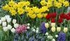 Classic Dutch Garden Flower Bulbs (125-Piece)