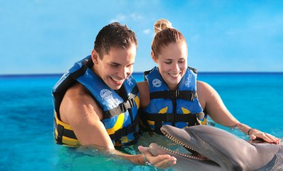 image for Swim with Dolphins in Mexico, Caribbean and Jamaica at Dolphin Discovery (Up to 38% Off). 15 Locations Available