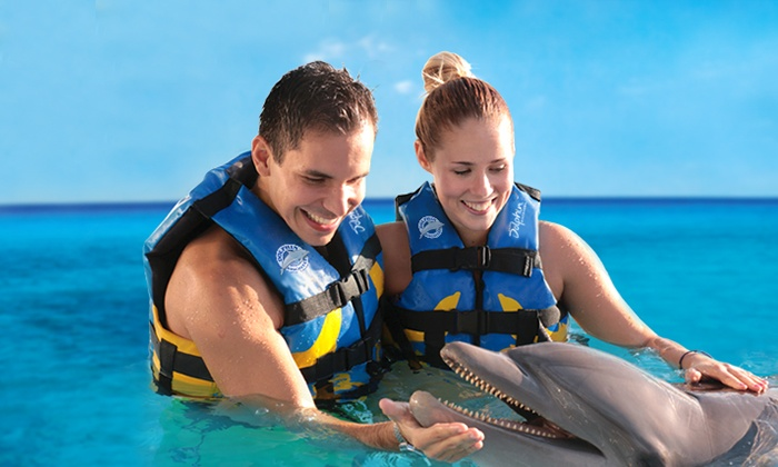 dolphin discovery up to 32 off san jose groupon