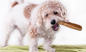 Downtown Pet Supply Himalayan Yak Dog Chews by the Pound
