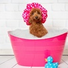Up to 50% Off Dog Grooming at Pampered Paws Grooming Salon