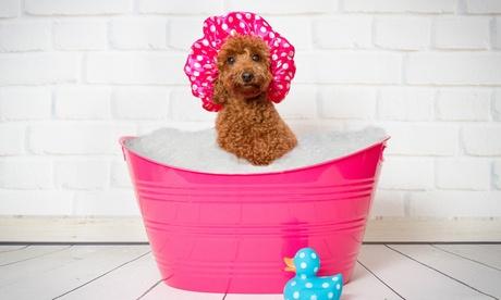 Toelettatura cani di qualsiasi dimensione da Bibi Wash (sconto 50 %)