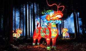 Tampa's Lowry Park Zoo: Admission for Two or Four to Zoominations Lantern Festival at Tampa's Lowry Park Zoo (Up to 51% Off)