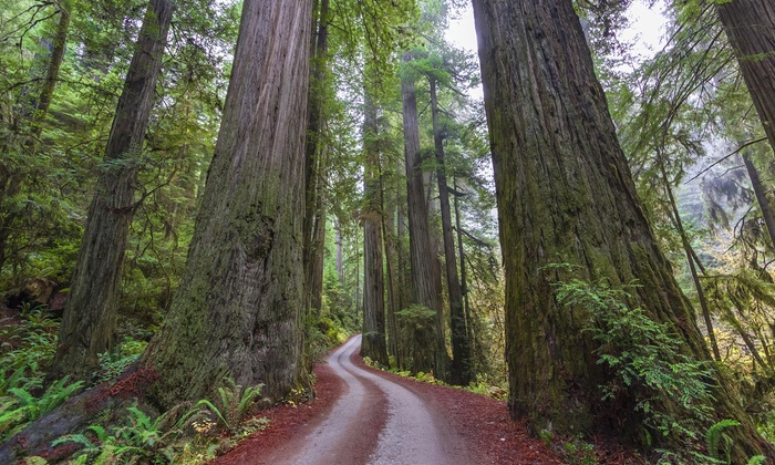 Sequoia Nature & Science Adventures - Orangevale: $20 for State Capital or Pony Express Walking Tour at Sequoia Nature & Science Adventures ($40 Value)