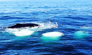 Captain John Whale Watching & Fishing Tours: $58 for a Whale-Watching Tour for Two Adults from Captain John Whale Watching & Fishing Tours (Up to $96 Value)