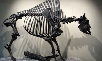 image for Visit to the Fossil Discovery Center (Up to 59% Off). Four Options Available.
