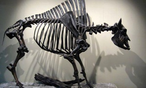 Visit To The Fossil Discovery Center (up To 50% Off). Four Options Available.