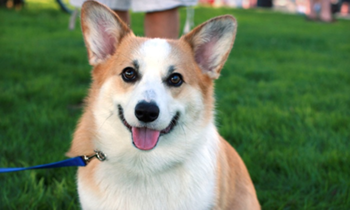 Pets and the City - South Philadelphia East: Two Grooming Sessions for Dog Up to 40, 60, or 85 lb. at Pets and the City (Up to 55% Off)