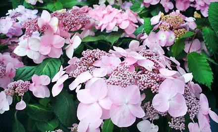 $40 Groupon to Neuhouser Garden & Gifts or Neuhouser Nursery & Landscaping - Neuhouser Garden & Gifts and Neuhouser Nursery & Landscaping in Fort Wayne