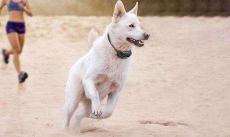Waterproof Rechargeable Remote Dog Training Collar c4af8716-49e2-11e8-af82-00259069d7cc