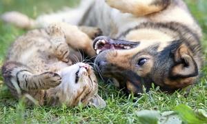 Centro Veterinario Antártida: Revisión completa de perro, gato o animales exóticos con opción a vacuna desde 16,95 € en Centro Veterinario Antártida