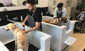 דירטי דוג ספא - Dirty Dog Spa: דירטי דוג ספא, מספרה ושטיפה לכלבים בדיזנגוף: שטיפה עצמית ב-25 ₪, או שטיפה + תספורת לכל סוגי הכלבים ב-99 ₪ בלבד! גם בשישי