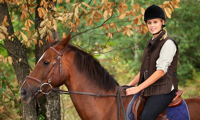 Amusing Adult horse lesson riding look for