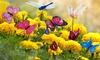 1 à 3 lots de 24 papillons et libellules pour décoration de jardin