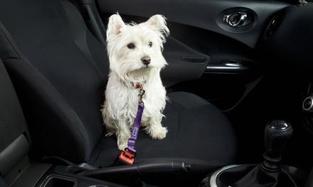 Bunty Haustier-Sicherheitsgürtel für Hunde und Katzen in der Farbe nach Wahl