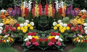 Bulbes fleurs 4 espèces