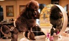 Puppy Paradise - Brooklyn - Marine Park: Grooming Services from Puppy Paradise (55% Off)