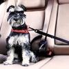 Cinturón para mascotas AGD